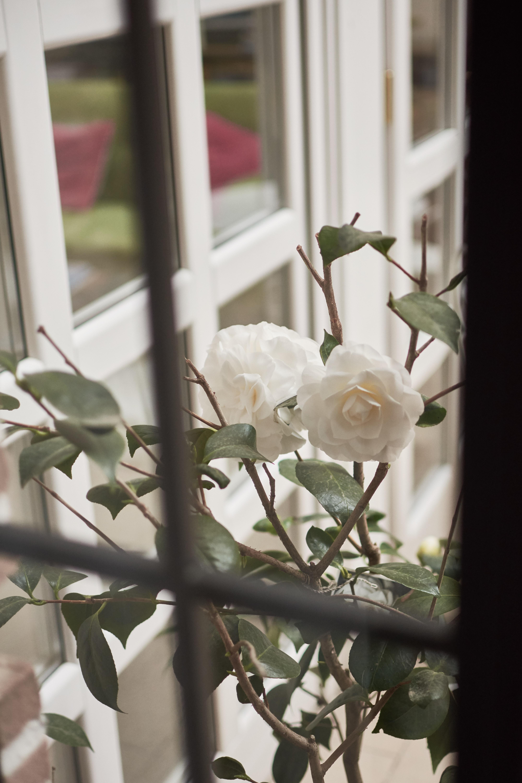 home - pianta - ornamentale